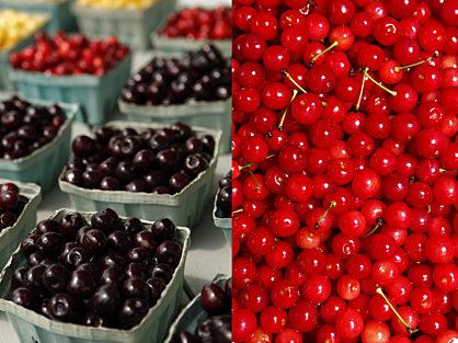 Cherry Varieties - Tart Cherries and Sweet Cherries