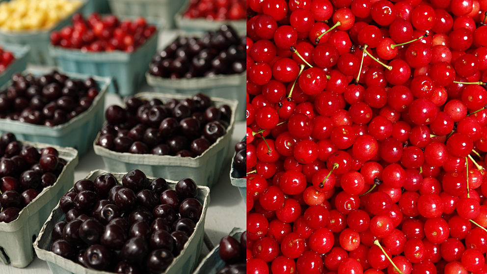 Cherry Varieties - Tart Cherries and Sweet Cherries